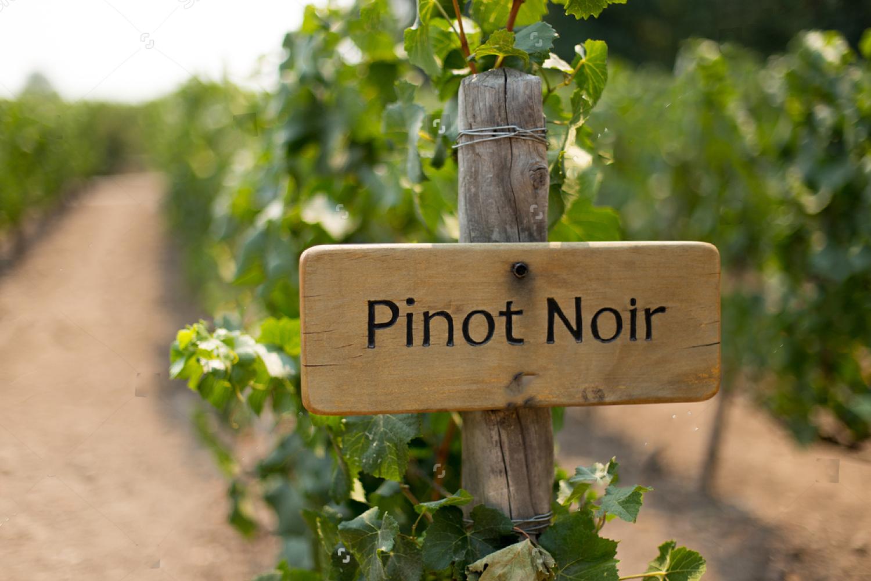 Pinot Nero, che Passione!